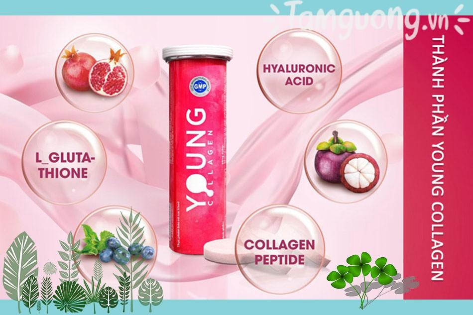 Thành phần của viên uống Young Collagen