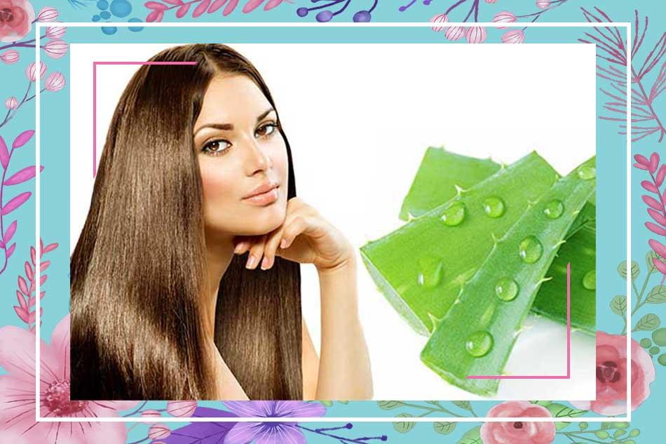 Cách làm tóc mọc nhanh cho nam bằng nha đam (lô hội)