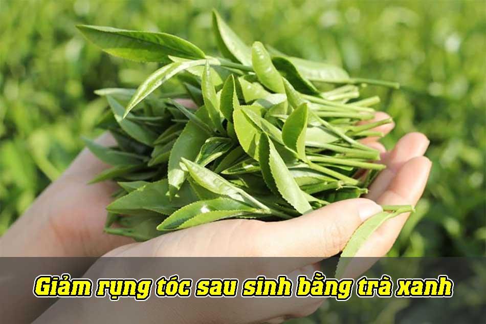 Giảm rụng tóc sau sinh bằng trà xanh