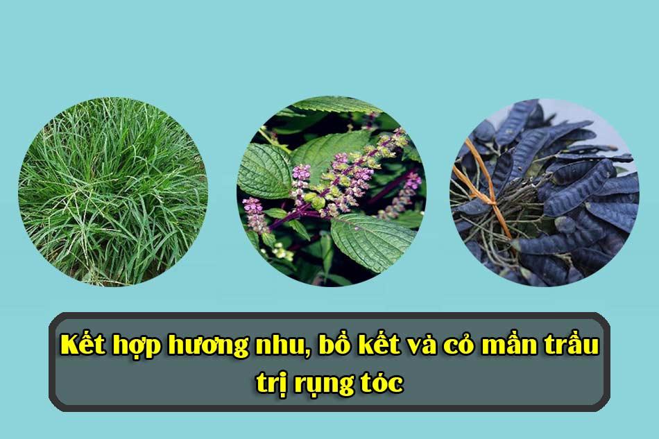 Kết hợp hương nhu, bồ kết và cỏ mần trầu trị rụng tóc