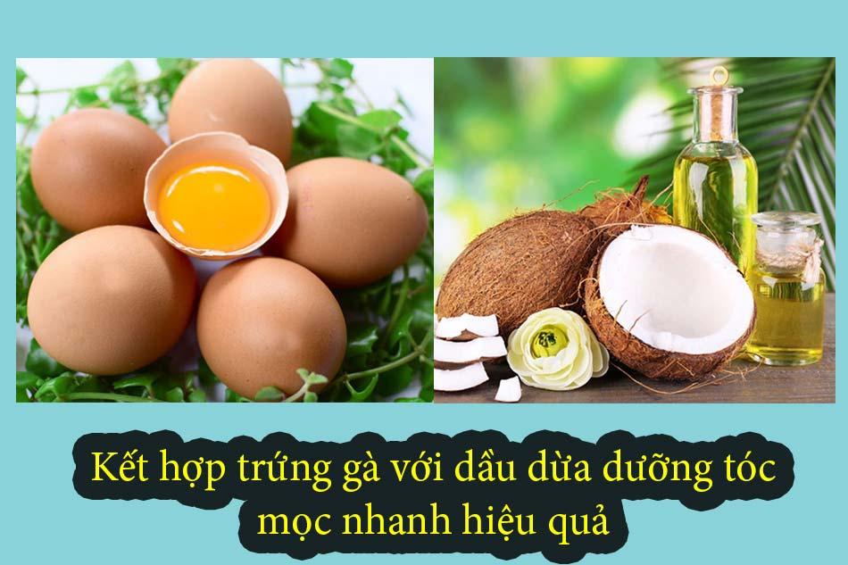 Kết hợp trứng gà với dầu dừa dưỡng tóc mọc nhanh hiệu quả