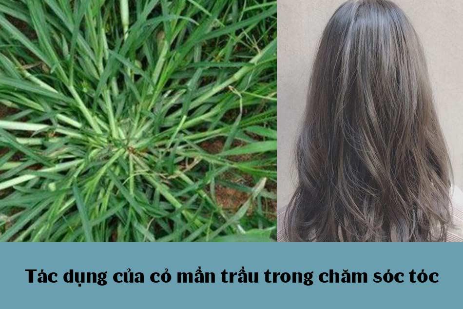 Tác dụng của cỏ mần trầu trong chăm sóc tóc